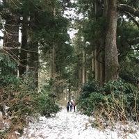 1/28/2018にNatashaTheNomadが箱根旧街道 杉並木で撮った写真