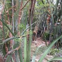 Botanischer Garten Jena 1 Tip