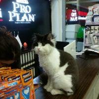 1/31/2016 tarihinde Turna B.ziyaretçi tarafından Pet Stop Veteriner Kliniği'de çekilen fotoğraf