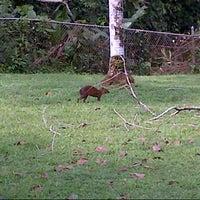 12/16/2012 tarihinde Mari B.ziyaretçi tarafından Gamboa Rainforest Resort'de çekilen fotoğraf