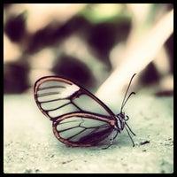 Photo taken at Butterfly Wonderland by Adam C. on 11/1/2013