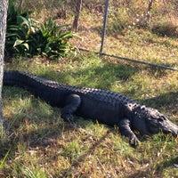 Foto tirada no(a) Alabama Gulf Coast Zoo por Steve O. em 11/23/2012