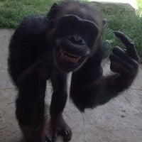 Снимок сделан в Houston Zoo пользователем Сергей Д. 7/23/2013