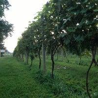 8/10/2013にRichard F.がCrossing Vineyards and Wineryで撮った写真
