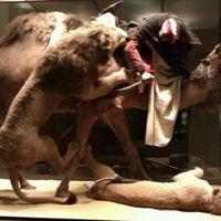Foto tirada no(a) Carnegie Museum Of Natural History por Liz S. em 2/25/2012