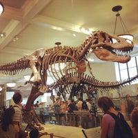 Foto scattata a American Museum of Natural History da Courtney N. il 7/23/2013