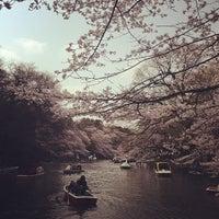 3/24/2013にSASAPi .が井の頭恩賜公園で撮った写真