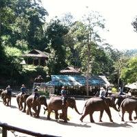 Foto scattata a Maesa Elephant Camp da Nancy B. il 10/29/2012