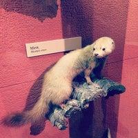 Das Foto wurde bei University of Michigan Museum of Natural History von Alessandro G. am 4/27/2014 aufgenommen