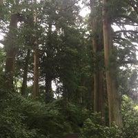 7/4/2018にGraeme O.が箱根旧街道 杉並木で撮った写真