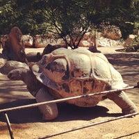 Снимок сделан в Phoenix Zoo пользователем Lauren G. 11/2/2012