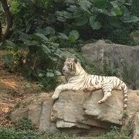Das Foto wurde bei Xiang Jiang Safari Park, Guangzhou von Jen am 10/3/2012 aufgenommen
