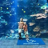 Foto tomada en Tropical Diver presented by Southwest Airlines por Stacy K. el 9/10/2017