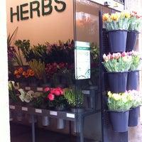 Flores A Domicilio En Barcelona Herbs Sant Gervasi Galvany