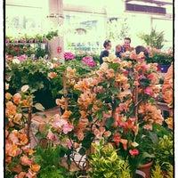 Jardinerie Truffaut - Gartencenter