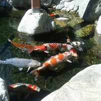 Photo prise au Japanese Friendship Garden par Drew K. le10/16/2012