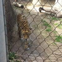 2/22/2014에 Jeremiah B.님이 Cameron Park Zoo에서 찍은 사진
