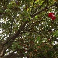 9/6/2014에 Kivanc K.님이 Adanın Bahçesi Zübeyde Hanım에서 찍은 사진