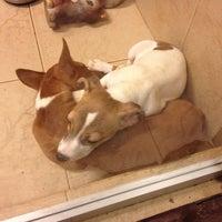 Das Foto wurde bei Cats & Dogs von Sasha Z. am 5/19/2013 aufgenommen