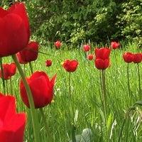 44d5f888b4b677 Photo taken at Tulipan im Britzer Garten by Stoffel B. on 4 21  ...