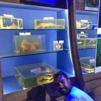 6/21/2018 tarihinde Gizem E.ziyaretçi tarafından Deniz Biyolojisi Müzesi'de çekilen fotoğraf