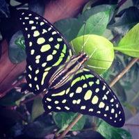 Photo taken at Butterfly Wonderland by Vanessa F. on 8/15/2013