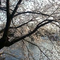 3/28/2013にkazunoko 秋.が井の頭恩賜公園で撮った写真
