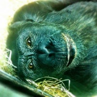 รูปภาพถ่ายที่ Zoo Berlin โดย Diego G. เมื่อ 12/24/2012