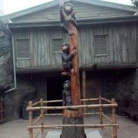 5/8/2014 tarihinde Aleksandra G.ziyaretçi tarafından Chimpanzee Exhibit'de çekilen fotoğraf