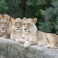 Foto scattata a Zoo Basel da Zoo Basel il 1/22/2014