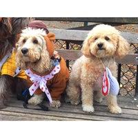 10/24/2015 tarihinde Paige C.ziyaretçi tarafından Tompkins Square Park Dog Run'de çekilen fotoğraf