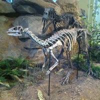 Foto diambil di Carnegie Museum of Natural History oleh Lileth L. pada 6/25/2013