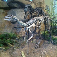 Foto tomada en Carnegie Museum of Natural History por Lileth L. el 6/25/2013