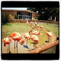 Foto tomada en Tulsa Zoo por Chase C. el 6/9/2012