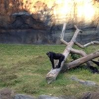 11/4/2012 tarihinde Michael A.ziyaretçi tarafından Chimpanzee Exhibit'de çekilen fotoğraf