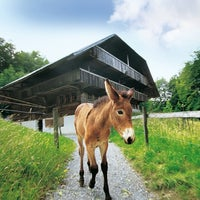 Das Foto wurde bei Swiss Open-Air Museum Ballenberg von Swiss Open-Air Museum Ballenberg am 4/2/2014 aufgenommen