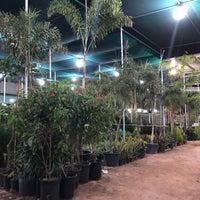 Warsan Plants & Flowers Nursery - Garden