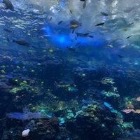 Foto tomada en Tropical Diver presented by Southwest Airlines por Dmitry G. el 11/6/2018