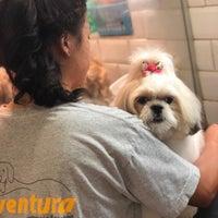 Das Foto wurde bei Ventura Veterinária & Petshop von Ventura Veterinária & Petshop am 9/30/2019 aufgenommen