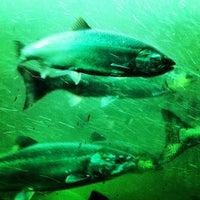 Foto scattata a Hiram M. Chittenden Locks da Matthew H. il 9/15/2012