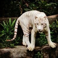 Снимок сделан в Singapore Zoo пользователем Jasmine E. 10/15/2012