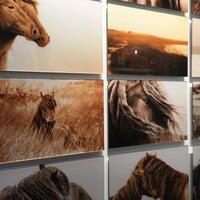 Foto scattata a The Wild Horses of Sable Island da Nars E. il 1/10/2016