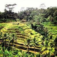Снимок сделан в Tegallalang Rice Terraces пользователем Joanne L. 5/14/2013