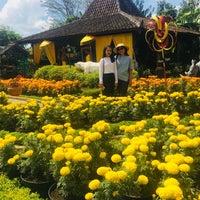 Taman Bunga Begonia Garden