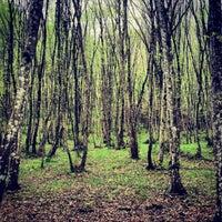 Das Foto wurde bei Belgrad Ormanı von Farana M. am 4/5/2013 aufgenommen