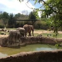 4/13/2013에 Charles H.님이 Cameron Park Zoo에서 찍은 사진