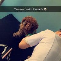 7/13/2016 tarihinde MATT A.ziyaretçi tarafından Afacan Veteriner Kliniği'de çekilen fotoğraf