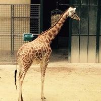 Foto scattata a Zoo Basel da Maria T. il 6/21/2015