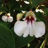 Снимок сделан в San Francisco Botanical Garden пользователем San Francisco Botanical Garden 7/25/2014
