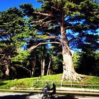 Das Foto wurde bei Golden Gate Park von Darius M. am 12/30/2012 aufgenommen
